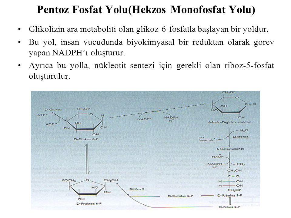 Pentoz Fosfat Yolu(Hekzos Monofosfat Yolu) Glikolizin ara metaboliti olan glikoz-6-fosfatla başlayan bir yoldur. Bu yol, insan vücudunda biyokimyasal