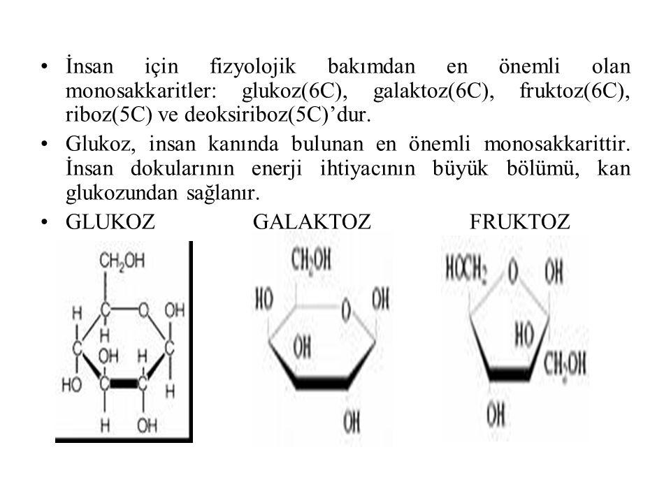 İnsan için fizyolojik bakımdan en önemli olan monosakkaritler: glukoz(6C), galaktoz(6C), fruktoz(6C), riboz(5C) ve deoksiriboz(5C)'dur. Glukoz, insan