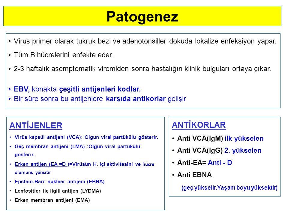 Patogenez Virüs primer olarak tükrük bezi ve adenotonsiller dokuda lokalize enfeksiyon yapar.