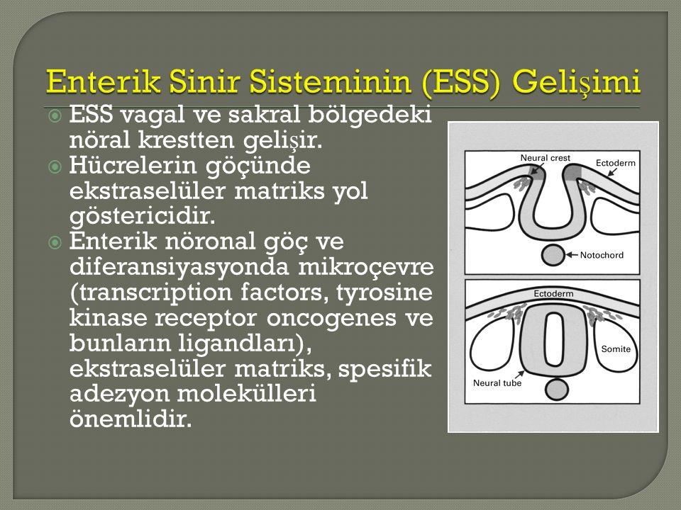  ESS vagal ve sakral bölgedeki nöral krestten geli ş ir.