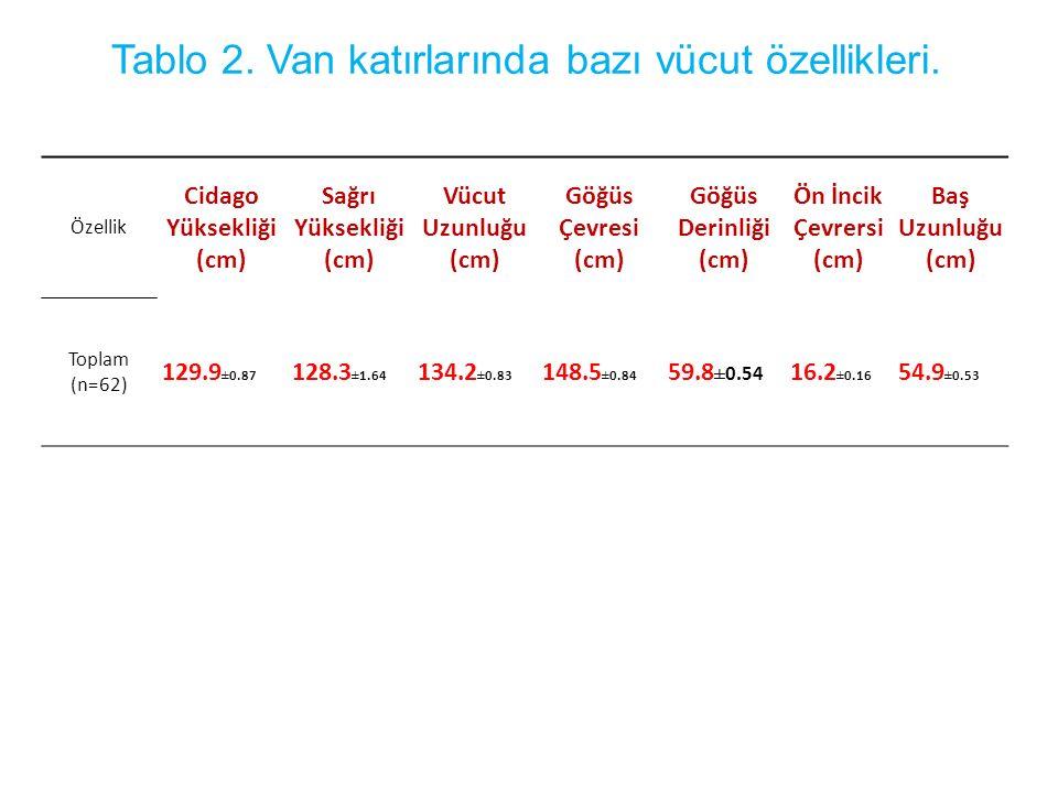 Tablo 2. Van katırlarında bazı vücut özellikleri.