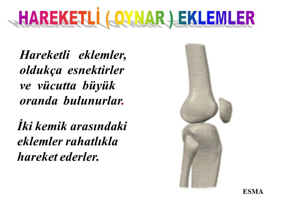 Hareketli eklemler, oldukça esnektirler ve vücutta büyük oranda bulunurlar. İki kemik arasındaki eklemler rahatlıkla hareket ederler. ESMA