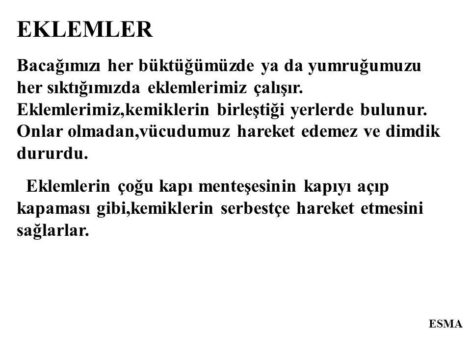 ESMA EKLEM ÇEŞİTLERİ 1.OYNAR ( HAREKETLİ) EKLEMLER 2.