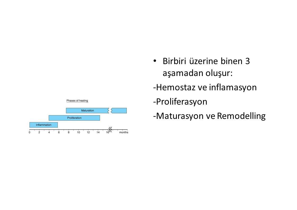 Birbiri üzerine binen 3 aşamadan oluşur: -Hemostaz ve inflamasyon -Proliferasyon -Maturasyon ve Remodelling