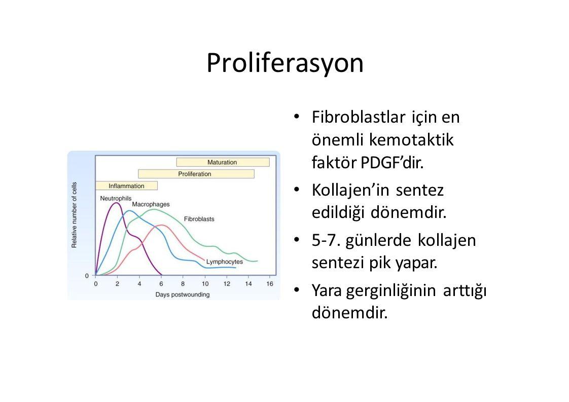 Proliferasyon Fibroblastlar için en önemli kemotaktik faktör PDGF'dir. Kollajen'in sentez edildiği dönemdir. 5-7. günlerde kollajen sentezi pik yapar.