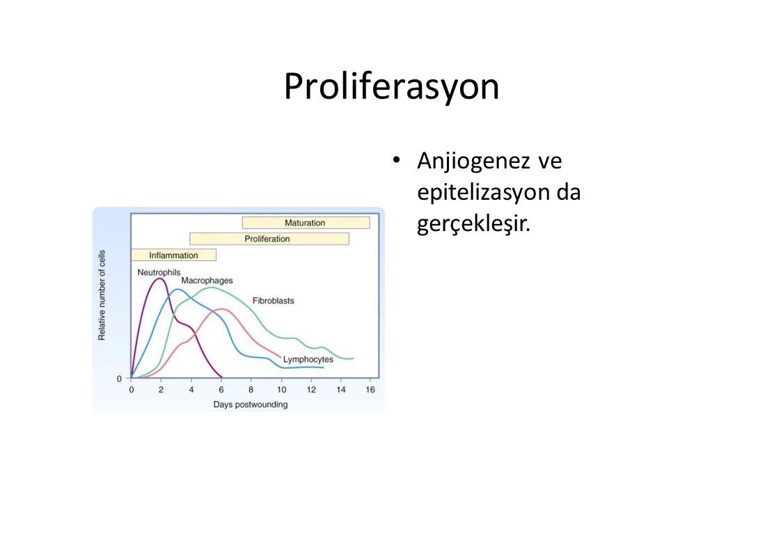 Proliferasyon Anjiogenez ve epitelizasyon da gerçekleşir.