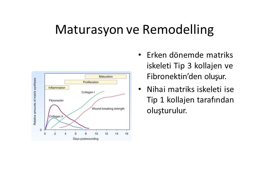 Maturasyon ve Remodelling Erken dönemde matriks iskeleti Tip 3 kollajen ve Fibronektin'den oluşur. Nihai matriks iskeleti ise Tip 1 kollajen tarafında