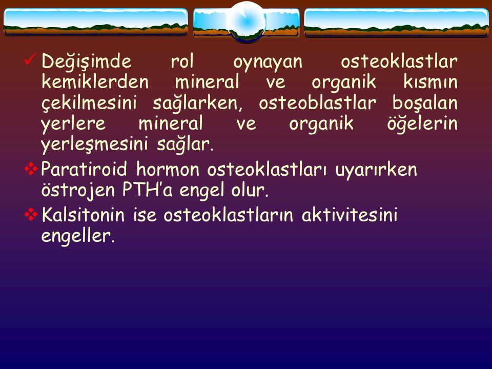 Değişimde rol oynayan osteoklastlar kemiklerden mineral ve organik kısmın çekilmesini sağlarken, osteoblastlar boşalan yerlere mineral ve organik öğelerin yerleşmesini sağlar.