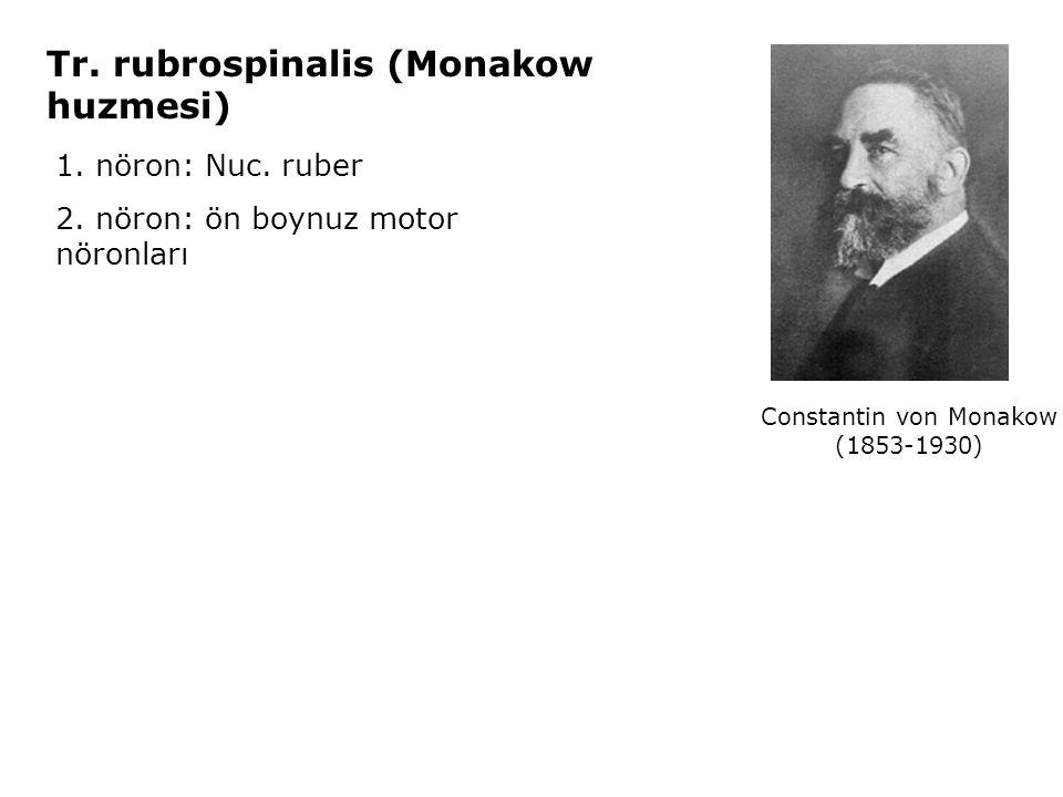 1. nöron: Nuc. ruber 2. nöron: ön boynuz motor nöronları Tr. rubrospinalis (Monakow huzmesi) Constantin von Monakow (1853-1930)