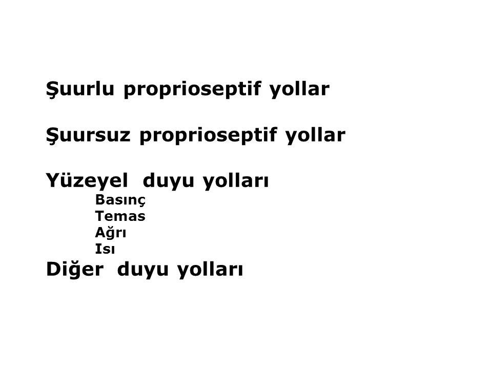 Şuurlu proprioseptif yollar Şuursuz proprioseptif yollar Yüzeyel duyu yolları Basınç Temas Ağrı Isı Diğer duyu yolları