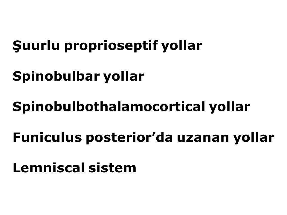 Funiculus posterior'da bulunan çıkan yollar'ın içerisinde taşınan duyular Basınç, dokunma duyularının zamanını, yerini, stimülasyonların cinsini ayırmamızı sağlayan duyular (taktil diskriminasyon) İki nokta diskriminasyonu Topognosis (deri yüzeyine uygulanan basıncın yerini saptama) Sterognozis (Dokunarak cisimlerin şeklini tanıma) Pallesthesia (Yüzeyin pürüzlü veya düz olduğunu algılama) Proprioseptif duyu Bir kısmı Funiculus posterior içerisinde Bir kısmı da Tr.