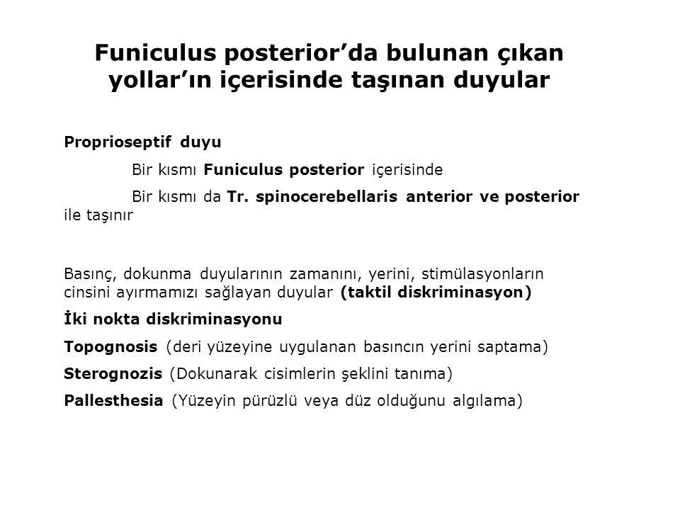 Gang.spinale Nucleus proprius Lamina V, VI, VII Tr.