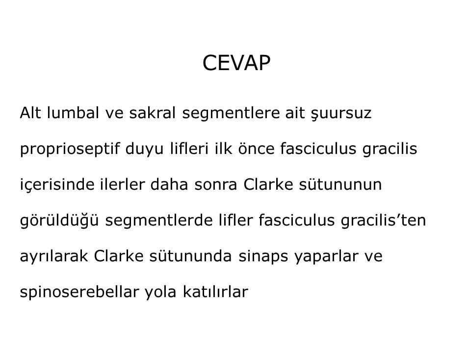 CEVAP Alt lumbal ve sakral segmentlere ait şuursuz proprioseptif duyu lifleri ilk önce fasciculus gracilis içerisinde ilerler daha sonra Clarke sütunu