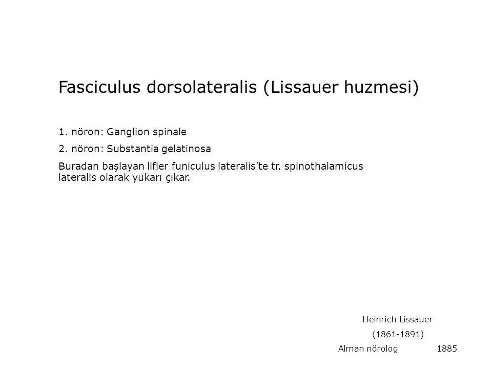 1. nöron: Ganglion spinale 2. nöron: Substantia gelatinosa Buradan başlayan lifler funiculus lateralis'te tr. spinothalamicus lateralis olarak yukarı
