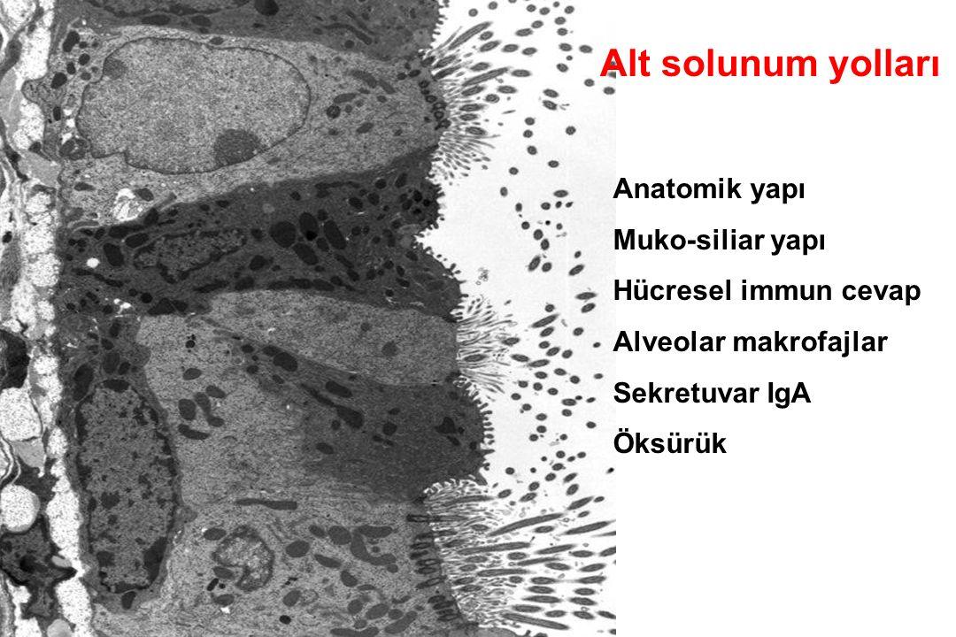 OROFARENKS -ORAL KAVİTE Tükrü :600-1000 tür-10 5 -10 9 tür-10 5 -10 9 cfu/ml S.salivarus (6-9.aylarda %98 i oluşturur), S.sanguis, S.mutans (dişlerle kaim) S.sobrinus, Bacteroides ssp.
