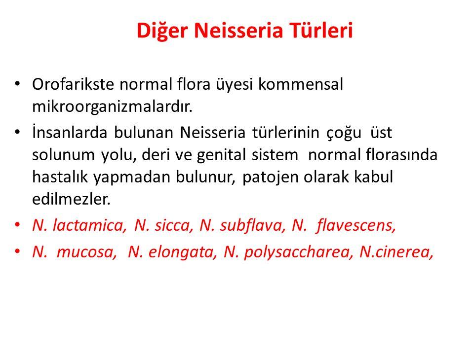 Diğer Neisseria Türleri Orofarikste normal flora üyesi kommensal mikroorganizmalardır. İnsanlarda bulunan Neisseria türlerinin çoğu üst solunum yolu,
