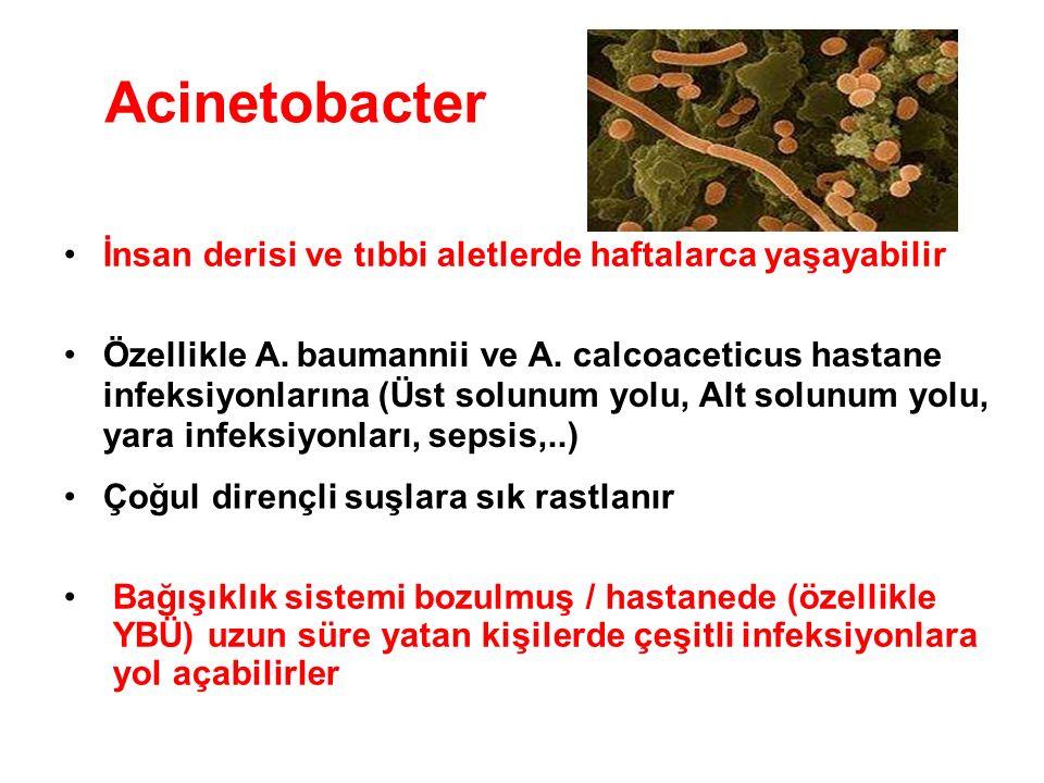 Acinetobacter İnsan derisi ve tıbbi aletlerde haftalarca yaşayabilir Özellikle A. baumannii ve A. calcoaceticus hastane infeksiyonlarına (Üst solunum
