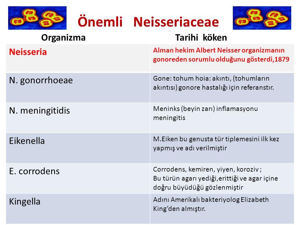 Organizma Tarihi köken Neisseria Alman hekim Albert Neisser organizmanın gonoreden sorumlu olduğunu gösterdi,1879.