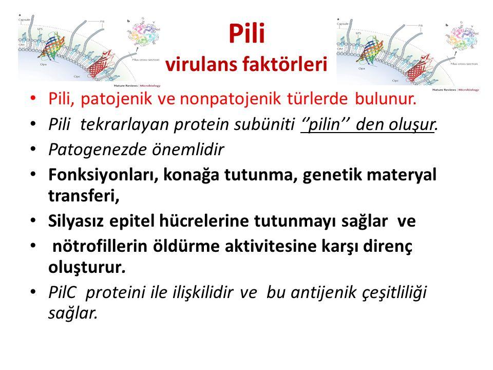 Pili virulans faktörleri Pili, patojenik ve nonpatojenik türlerde bulunur. Pili tekrarlayan protein subüniti ''pilin'' den oluşur. Patogenezde önemlid