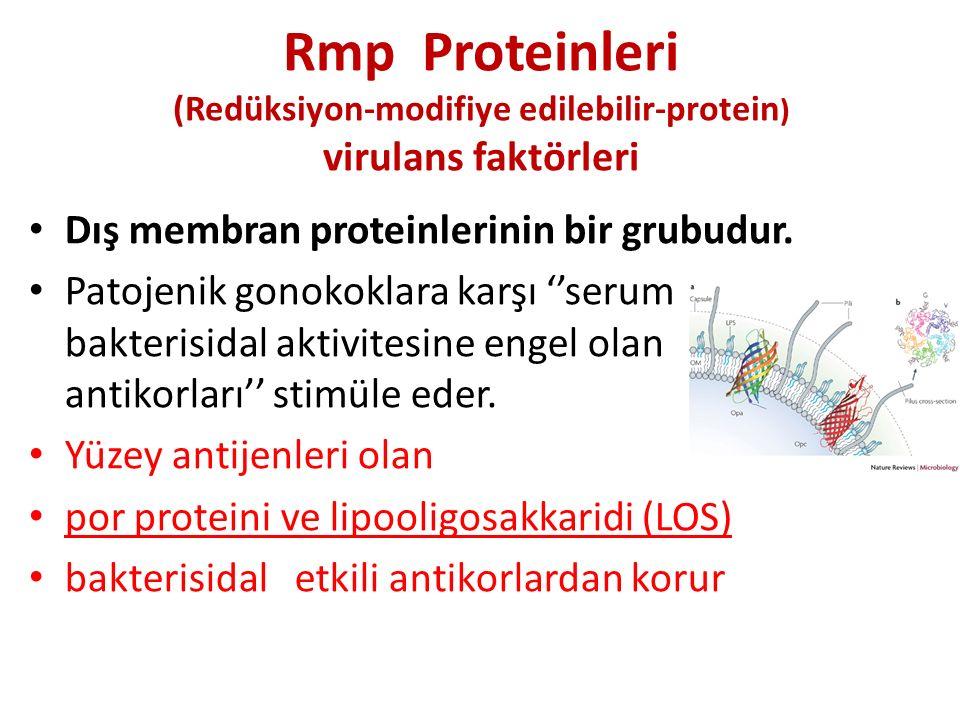 Rmp Proteinleri (Redüksiyon-modifiye edilebilir-protein ) virulans faktörleri Dış membran proteinlerinin bir grubudur. Patojenik gonokoklara karşı ''s