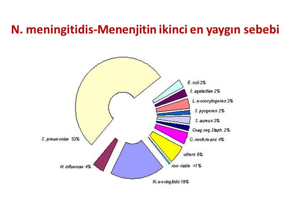 N. meningitidis-Menenjitin ikinci en yaygın sebebi