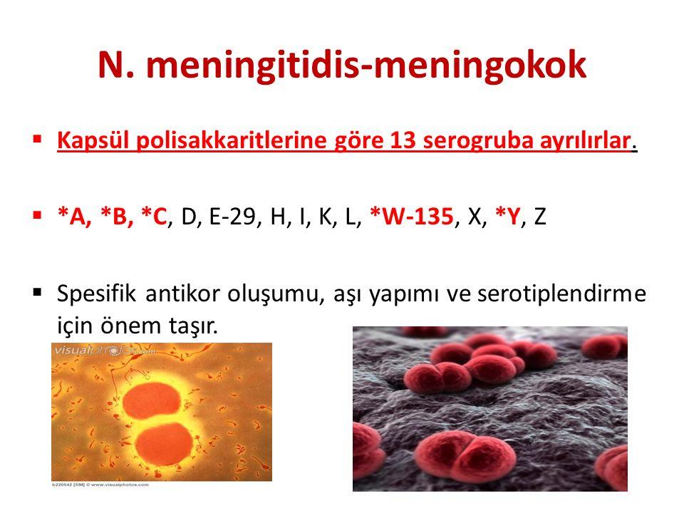 N.meningitidis-meningokok  Kapsül polisakkaritlerine göre 13 serogruba ayrılırlar.