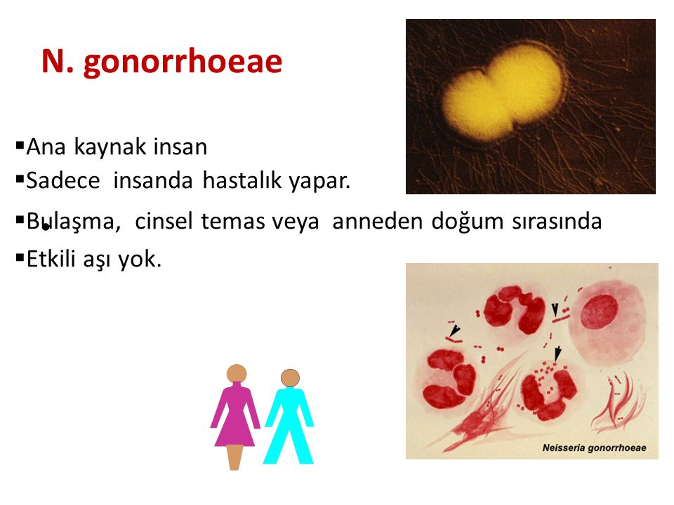 N. gonorrhoeae  Ana kaynak insan  Sadece insanda hastalık yapar.  Bulaşma, cinsel temas veya anneden doğum sırasında  Etkili aşı yok. infekte