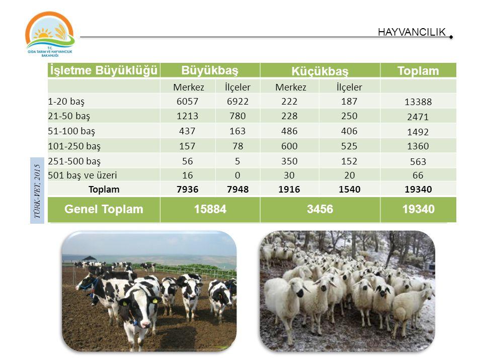 TÜRK-VET, 2015 HAYVANCILIK İlimizde 5 adet kanatlı (yumurtacı) işletmesinde toplam 194.500 kanatlı mevcudu vardır.