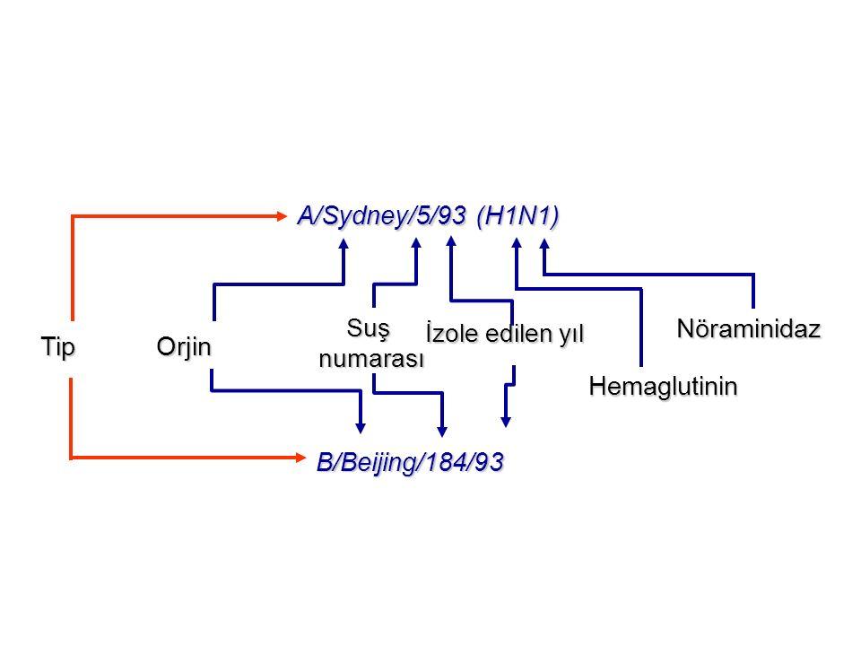 Tip Orjin Tip Orjin A/Sydney/5/93 (H1N1) B/Beijing/184/93 Suşnumarası Hemaglutinin Nöraminidaz İzole edilen yıl