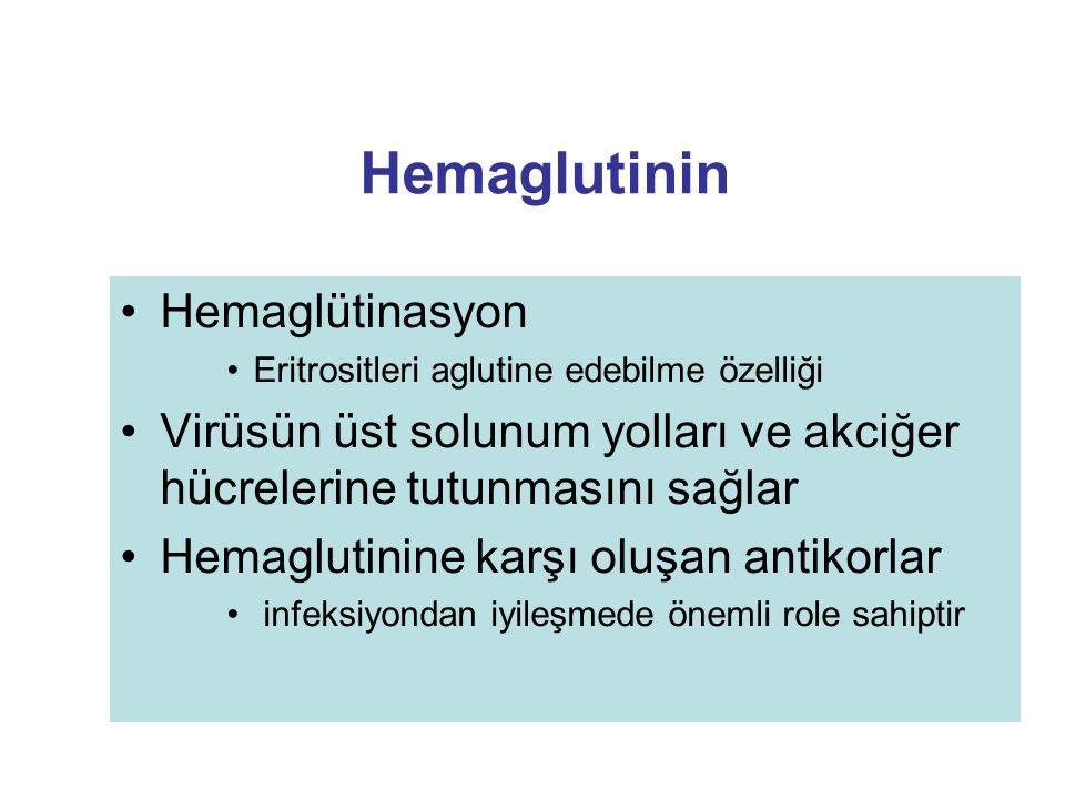 Hemaglutinin Hemaglütinasyon Eritrositleri aglutine edebilme özelliği Virüsün üst solunum yolları ve akciğer hücrelerine tutunmasını sağlar Hemaglutin