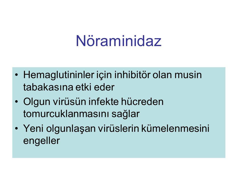 Nöraminidaz Hemaglutininler için inhibitör olan musin tabakasına etki eder Olgun virüsün infekte hücreden tomurcuklanmasını sağlar Yeni olgunlaşan vir
