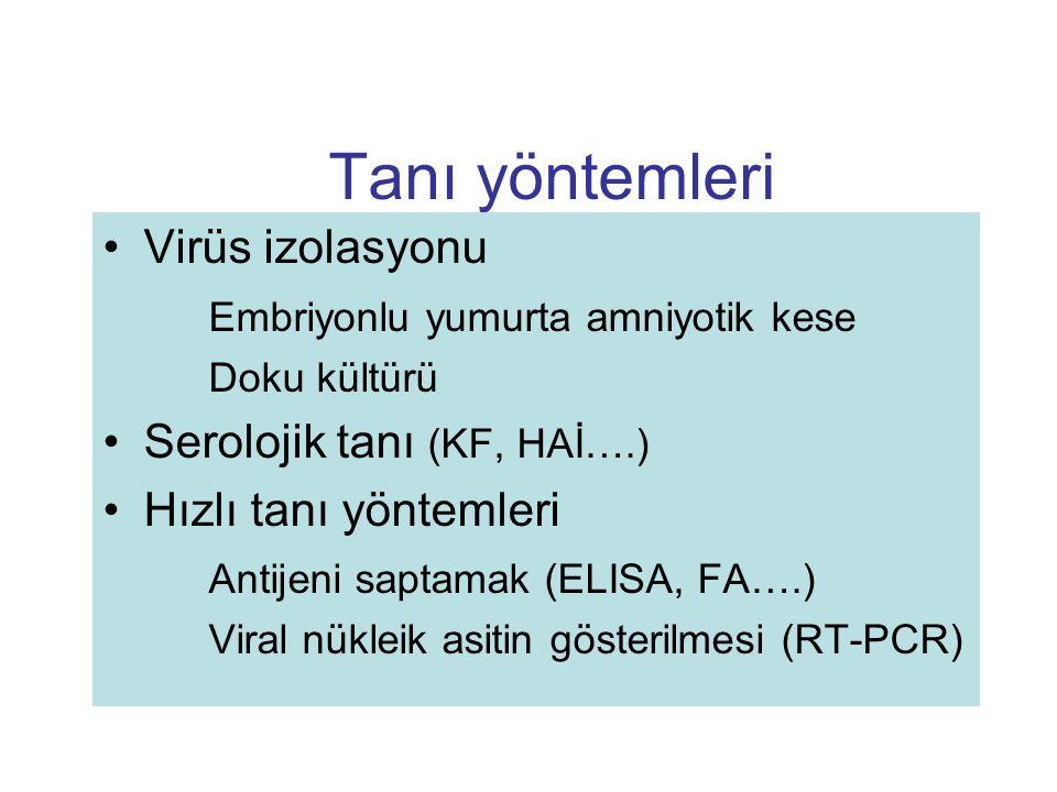 Tanı yöntemleri Virüs izolasyonu Embriyonlu yumurta amniyotik kese Doku kültürü Serolojik tanı (KF, HAİ….) Hızlı tanı yöntemleri Antijeni saptamak (EL