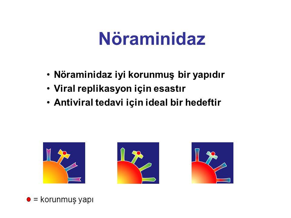 Nöraminidaz Nöraminidaz iyi korunmuş bir yapıdır Viral replikasyon için esastır Antiviral tedavi için ideal bir hedeftir = korunmuş yapı