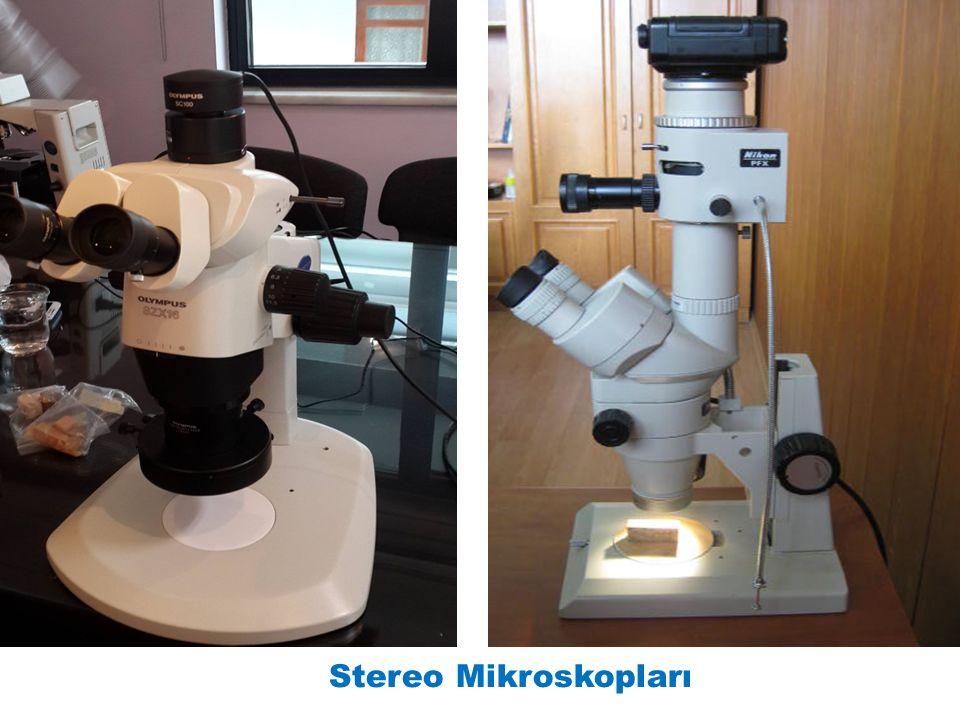 Stereo Mikroskopları