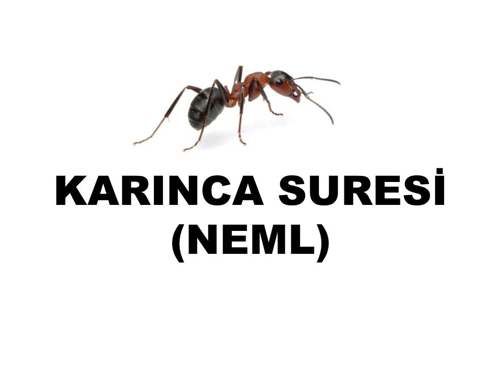 KARINCA SURESİ (NEML)