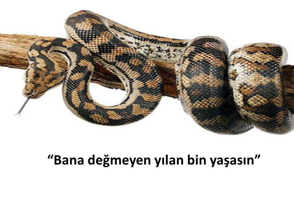 Bana değmeyen yılan bin yaşasın