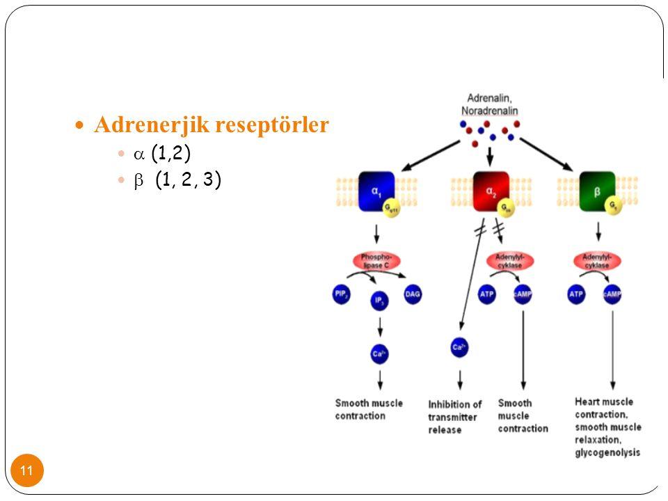Adrenerjik reseptörler  (1,2)  (1, 2, 3) 11