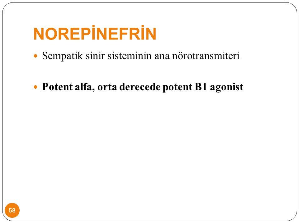 NOREPİNEFRİN Sempatik sinir sisteminin ana nörotransmiteri Potent alfa, orta derecede potent B1 agonist 58