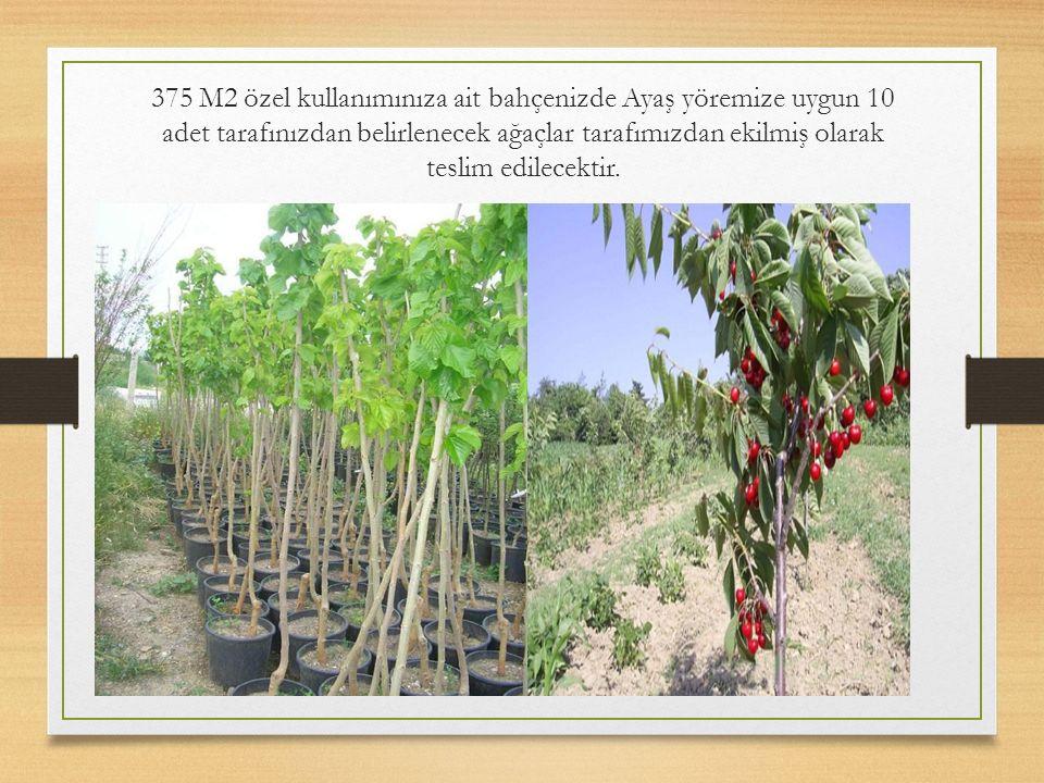 375 M2 özel kullanımınıza ait bahçenizde Ayaş yöremize uygun 10 adet tarafınızdan belirlenecek ağaçlar tarafımızdan ekilmiş olarak teslim edilecektir.