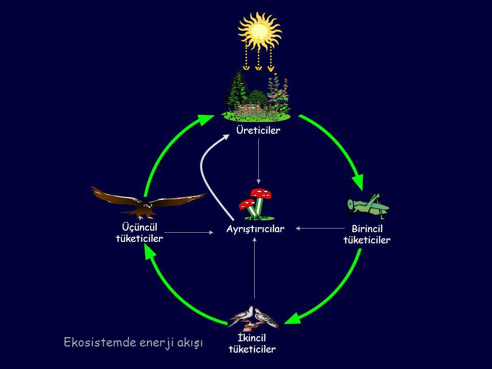 Ekosistemde enerji akışı İkincil tüketiciler Ayrıştırıcılar Üçüncül tüketiciler Birincil tüketiciler Üreticiler