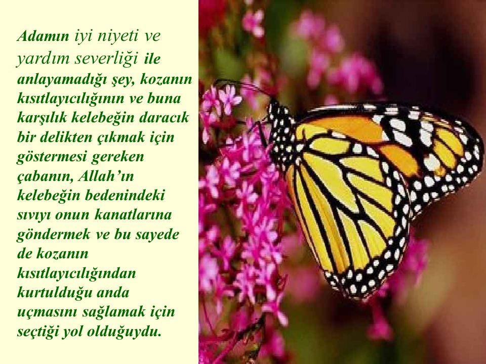 Adamın iyi niyeti ve yardım severliği ile anlayamadığı şey, kozanın kısıtlayıcılığının ve buna karşılık kelebeğin daracık bir delikten çıkmak için göstermesi gereken çabanın, Allah'ın kelebeğin bedenindeki sıvıyı onun kanatlarına göndermek ve bu sayede de kozanın kısıtlayıcılığından kurtulduğu anda uçmasını sağlamak için seçtiği yol olduğuydu.