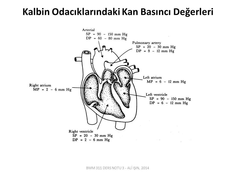 Vücuttaki Ana Arter & Toplar Damarlar BMM 311 DERS NOTU 3 - ALİ IŞIN, 2014
