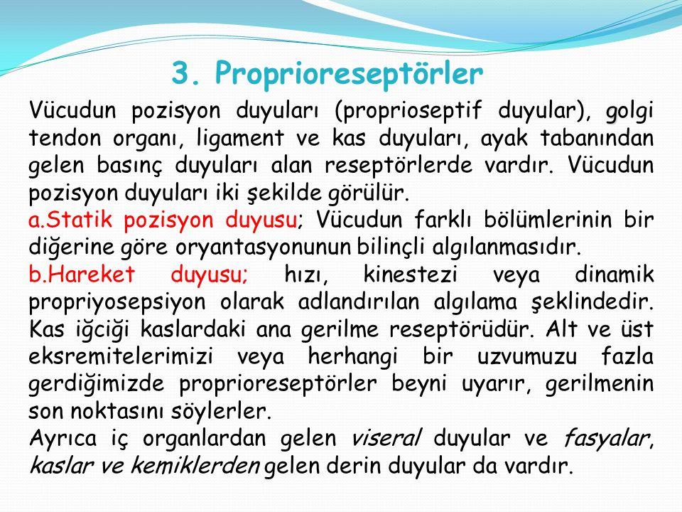 3. Proprioreseptörler g Vücudun pozisyon duyuları (proprioseptif duyular), golgi tendon organı, ligament ve kas duyuları, ayak tabanından gelen basınç