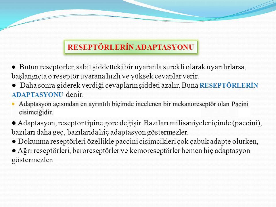 ● Adaptasyon, reseptör tipine göre değişir.
