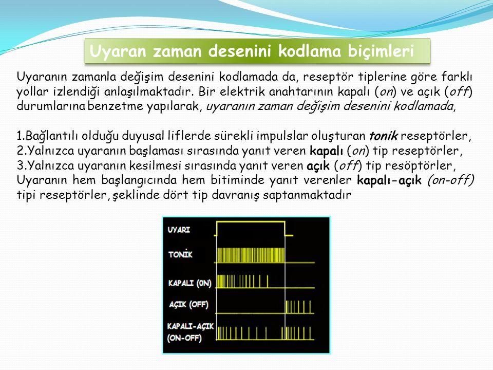 Uyaranın zamanla değişim desenini kodlamada da, reseptör tiplerine göre farklı yollar izlendiği anlaşılmaktadır.