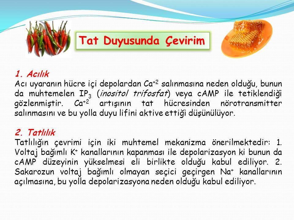 Tat Duyusunda Çevirim 1.