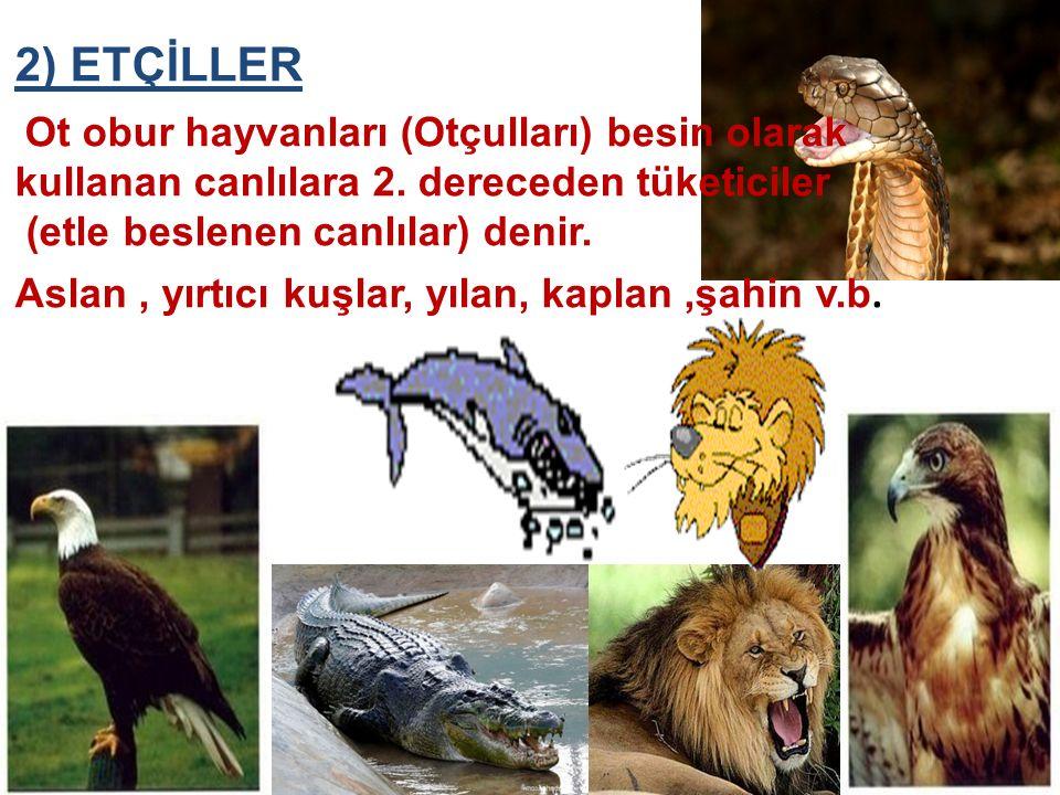 2) ETÇİLLER Ot obur hayvanları (Otçulları) besin olarak kullanan canlılara 2. dereceden tüketiciler (etle beslenen canlılar) denir. Aslan, yırtıcı kuş