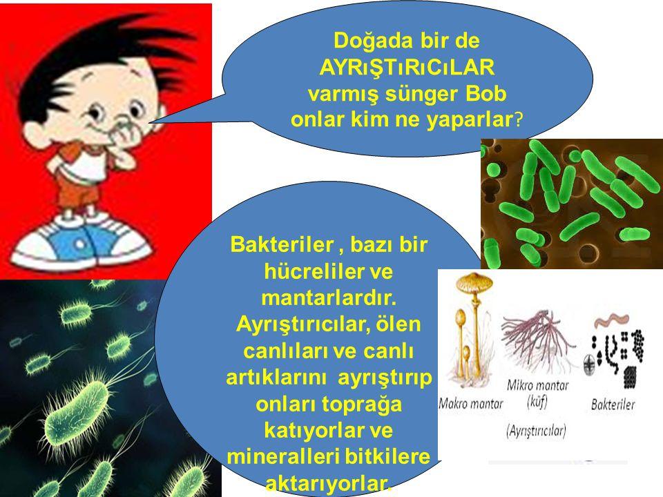 Doğada bir de AYRıŞTıRıCıLAR varmış sünger Bob onlar kim ne yaparlar ? Bakteriler, bazı bir hücreliler ve mantarlardır. Ayrıştırıcılar, ölen canlıları