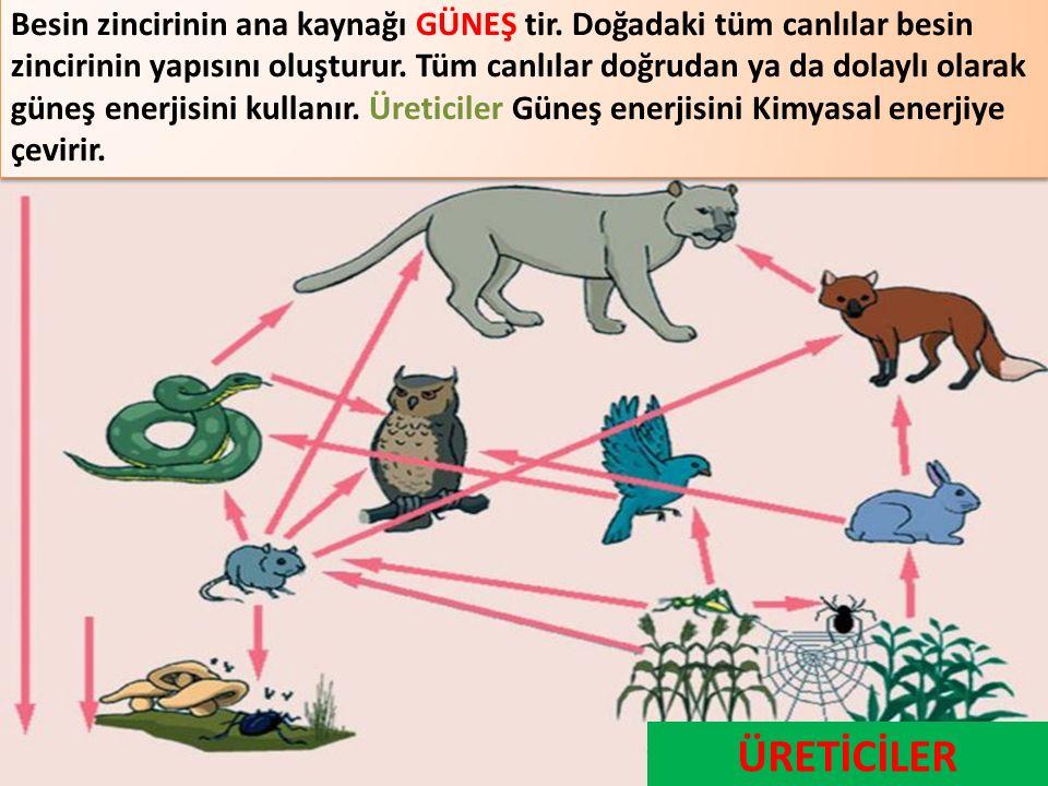 Besin zincirinin ana kaynağı GÜNEŞ tir. Doğadaki tüm canlılar besin zincirinin yapısını oluşturur. Tüm canlılar doğrudan ya da dolaylı olarak güneş en