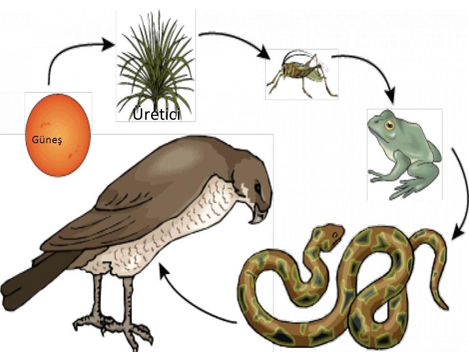 Bitki topraktan kökleri ile su,havadan ise yapraklarıyla karbon dioksit alarak güneş ışığı yardımıyla basit şeker(glikoz) ve oksijen gazı (O 2 ) oluşturur.